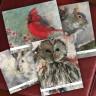 Woodland Animal Fold Notes - Beth Clary Schwier
